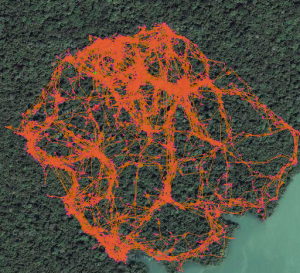 BenBob the kinkajou's home range as recorded with 4min GPS points over ~1 month on Barro Colorado Island, Panamaå